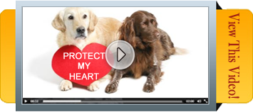hvPet.com and Poochie Treats Special Message for You and Your Dog